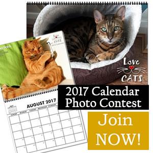 Photo contest 2017 Calendar