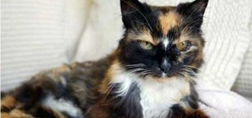 Dixie the cat returns home after nine years