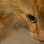 CityLink workers saved kitten dumped in tunnel
