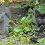 40 cats abandoned on the front lawn