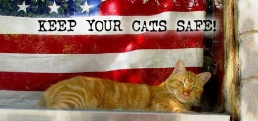 Keep your cat safe
