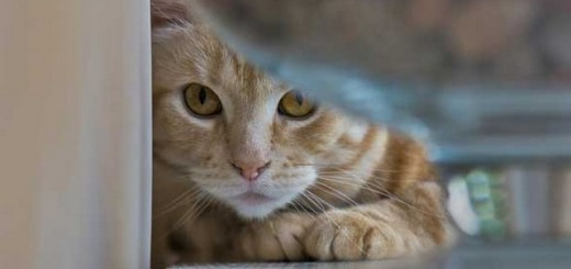 Hope for cats with FeLV