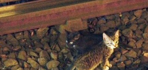 2 kittens stopped NYC subway
