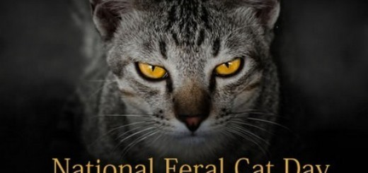 All about feral cats