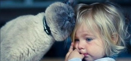 7 ways cats show they love us