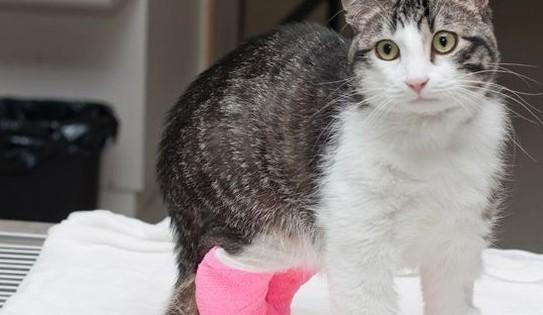 Corky was given life-saving surgery