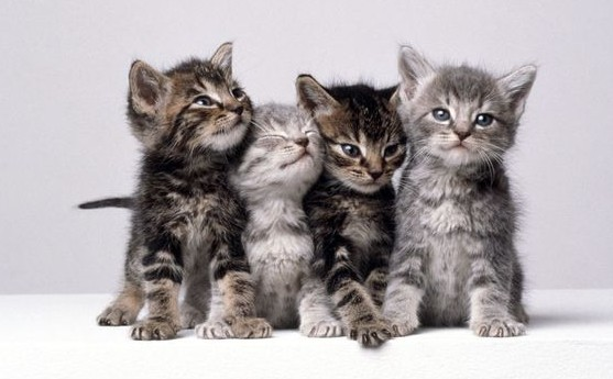 Vets have found that a form of feline seizure known as 'Tom and Jerry syndrome'