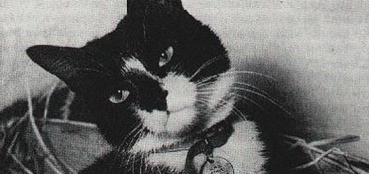 A British naval hero cat named Simon