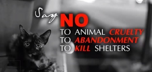 Say NO! to animal cruelty.