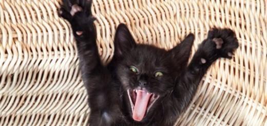 Crazy Cat Homes