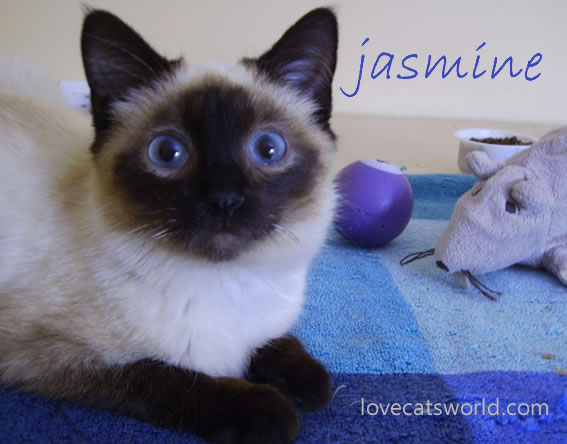 Jasmine 3 weeks later!