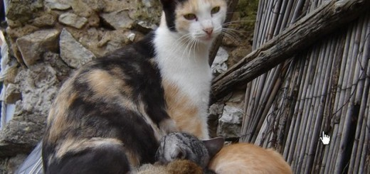 What can you do to help feral cats?