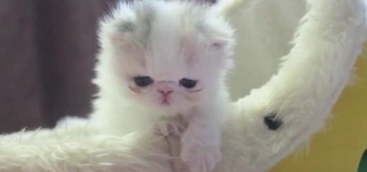 Fluffy Life Animal Crossing Comment Decorer Sa Ville