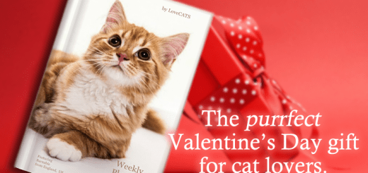 The purrfect Valentine's Day gift!