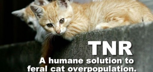 Keep Feral Spayed Cats In Crate Overnight