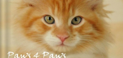 """""""Paws 4 Paws"""" Second Edition"""