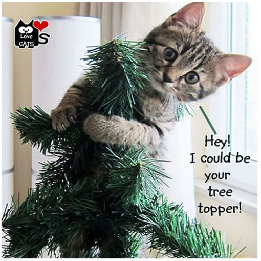 Are Christmas trees poisonous to cats? | LoveCATS World