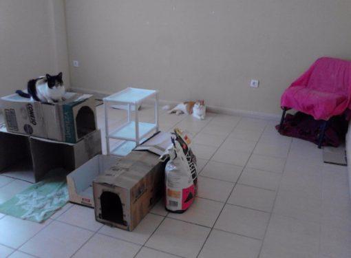 Former Cat Shelter in 2015