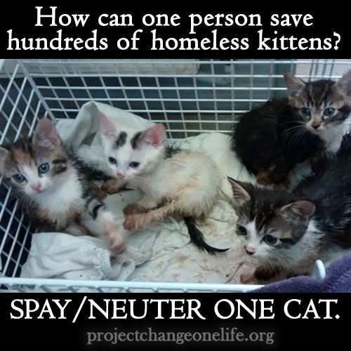 How can one person save hundreds homeless kittens? Just spay/neuter one cat.