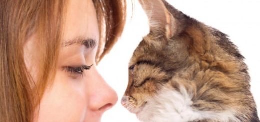 What type of crazy cat lady are you?