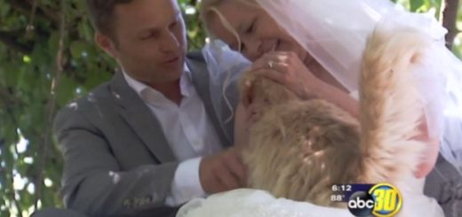 The wedding any cat lover dreams of!