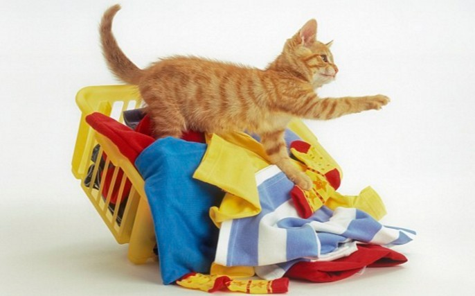 Can we keep our cats away from the laundry?