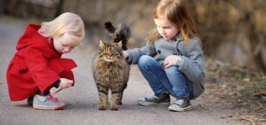 Dog Helpiong Cat