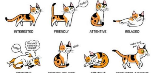 "Recognize common cat ""postures."""