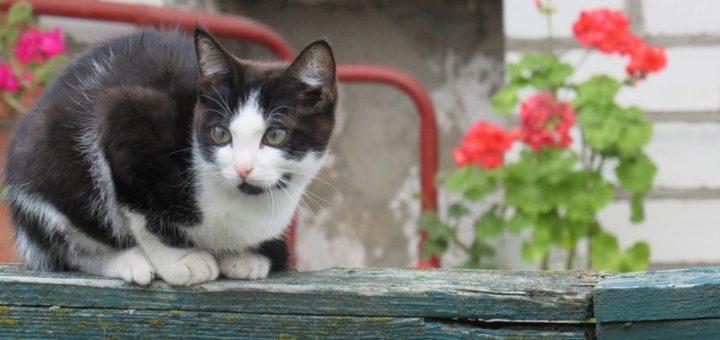 Cats Runny Eyes Treatment