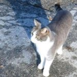 Toldo, a loyal Italian cat