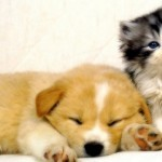 10 Differences Between Cats and Dogs