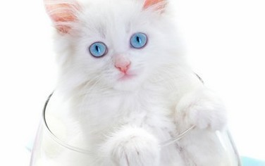 White Cats and Skin Cancer