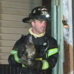 87 cats saved from sanctuary fire