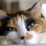 Women's Brains Are Like Calico Cats