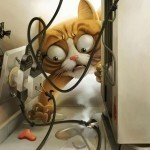 Household dangers to cats