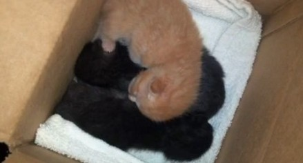 Kittens tossed into a drainage ditch