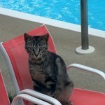 Cool Your Cat Down in the Summer