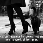 How do cats recognize their owners?