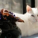 Queen Jasmine, a royal delight – By Lori