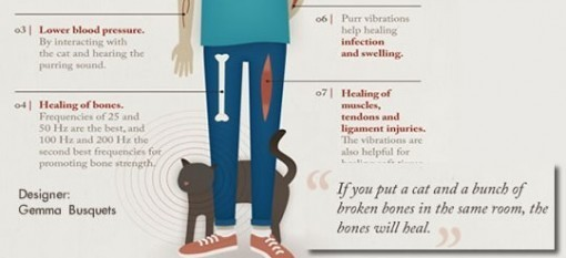 Healing cat purrs
