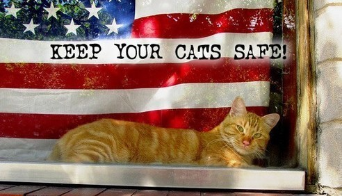 Keep your cats safe on July 4th