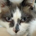 Benji, the Christmas kitten – by Carin