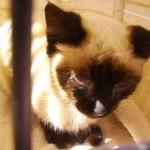 What is feline leukemia virus (FeLV)?