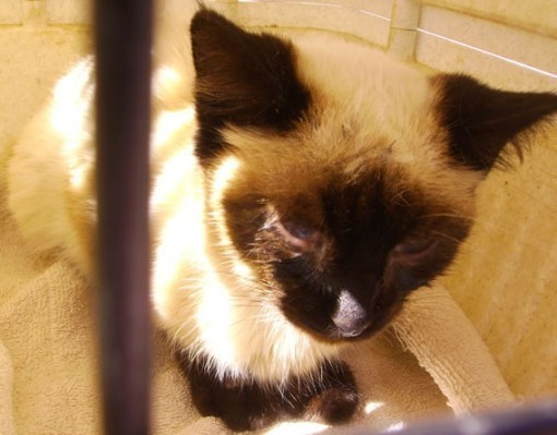 FeLV-infected cats are fund worldwide