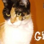 Meet Gigi, LoveCATS' latest rescue.