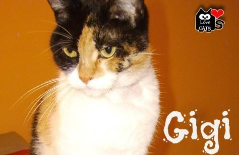Meet Gigi, LoveCATS' latest rescue.