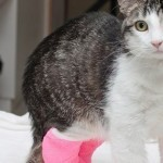 Corky was given life-saving surgery