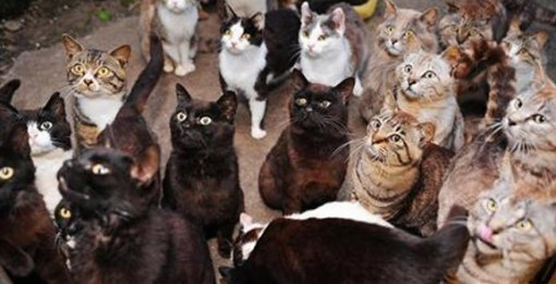 What possesses people to possess hundreds of pets?