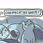Can cats see something we don't?