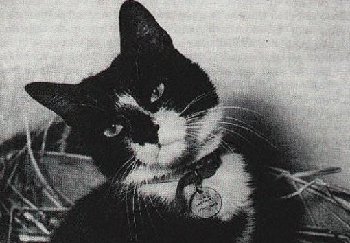 A British naval hero cat named Simon